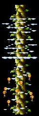 Beanstalk Climb